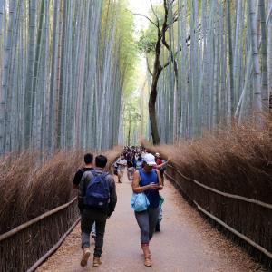 京都の代表的な観光名所が一つ【京都・嵐山の旅】PARTⅢ「嵯峨野・竹林の道」
