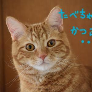 猫から搾取?