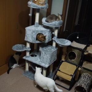 喜ぶ猫達と悲しくなった猫
