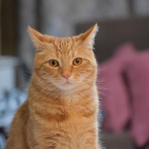 猫のワクチンどうしてる?