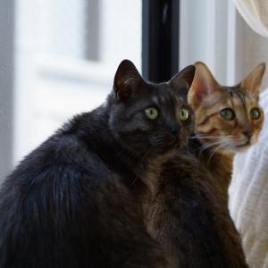 猫達には関係ない?在宅ワーク