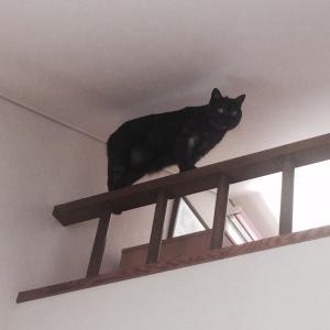 得意顔の籠城猫