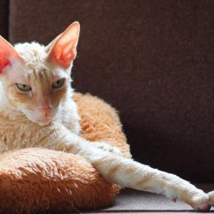 横着飼い主の目論見に無邪気に遊ぶ猫達