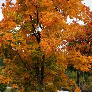 作業中「木枯らしに抱かれて」キョンキョンになりきってオバサンが歌います