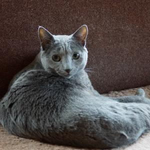 猫と暮らすあるある・・トホホ編