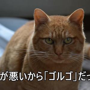 俺はゴルゴ・・もう仔猫じゃないんだゼ!