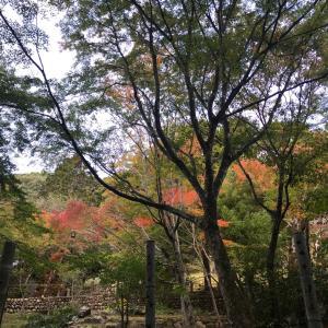 きょうの大人の遠足♡神社仏閣巡り静岡編