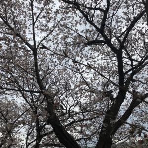 日本の文化としての音楽♡