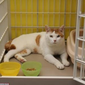福田にシェルターを持たせた猫:ケーパー