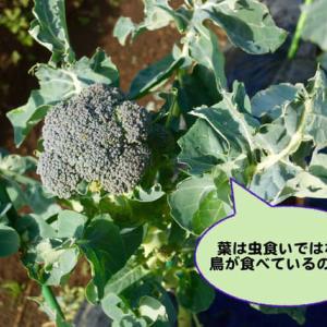 旬の野菜を食べる生活