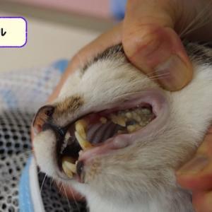 1猫の命を救う値段