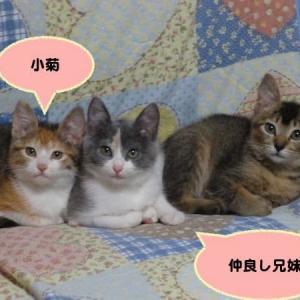 保護猫の中で健康な猫は少なかった
