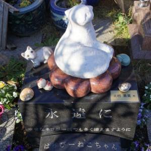 飼い猫さんの埋葬のこと