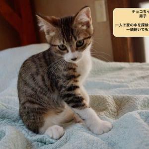 7月22日練馬で保護された5匹の子猫その後