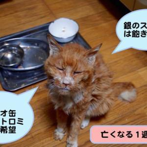 大往生した猫チャー君