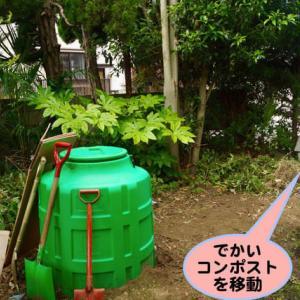 猫糞肥料で野菜を作る