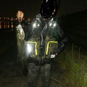 旧江戸川河口でシーバス72cm GET!