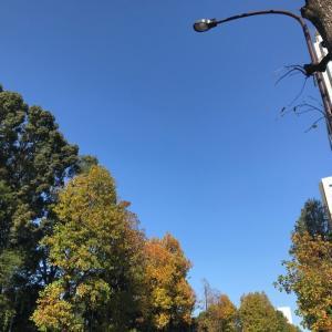 【東京散歩】青山から銀座〜星乃珈琲銀座店