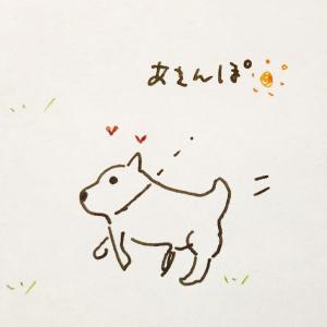 【50代の絵日記】あさんぽですがクールな柴犬