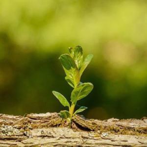 【時間】落ち込むときには花に学ぼ☆咲く時期はさまざま♪