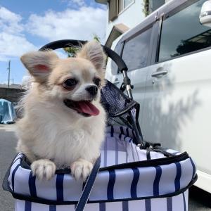 卒業犬チャーミーちゃんからのお便りです。