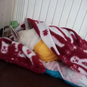 我が家のスムチーの寝かた。
