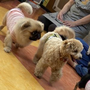 卒業犬 カムアくんが遊びに来てくれました。