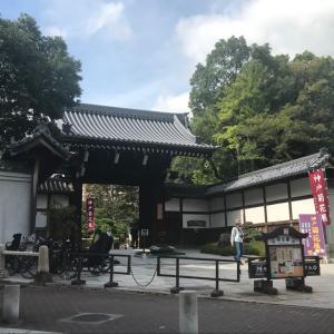 神戸 相楽園 第68回 菊花展 拝見してきました
