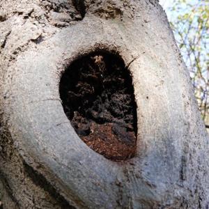 樹洞の住人