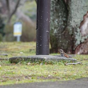 公園の野鳥たち
