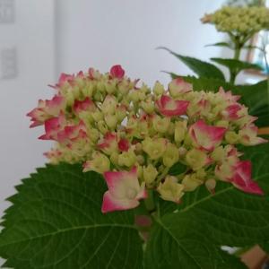 ダイソー、種類が豊富で驚いた物&花のある暮らし