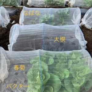 野菜作り始めました❣️