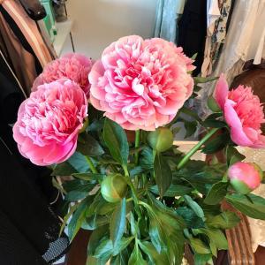 お花とマレーラのワンピースコラボコーデ