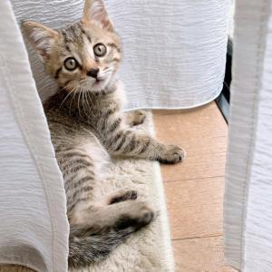 第2回里親会★参加猫情報⑦