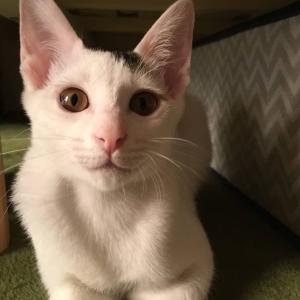 第5回 保護ねこ里親会にゃ 参加猫情報⑦