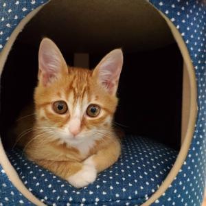 第6回 保護ねこ里親会にゃ 参加猫情報⑦