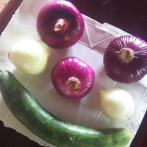 採ってきた野菜を台所で
