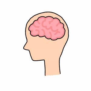 脳のMRIの結果