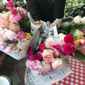 切り花と今朝の薔薇