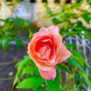 デプレアフルールジョーヌの花色が素敵