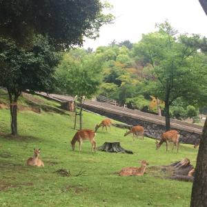 最近の色々…奈良といえば