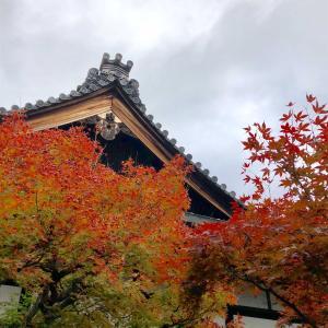 東福寺の紅葉 行列の中行くのも・・・