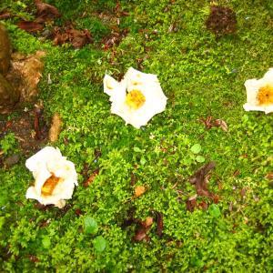 沙羅双樹と睡蓮