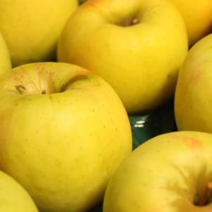 渋川りんご