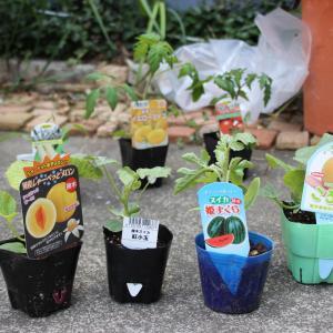2020 自給自足の家庭菜園