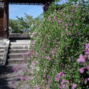 常林寺 萩