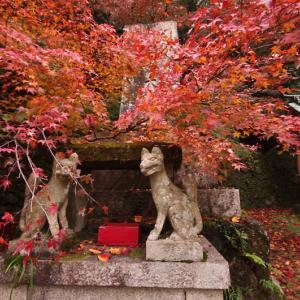 若山神社 紅葉