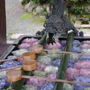 柳谷観音 紫陽花