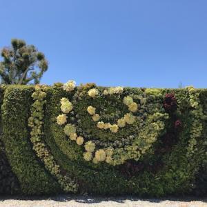 South Coast Botanic Garden in パロスヴァーデス