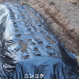 20190912 カフェOTTO通信 畑衣替え